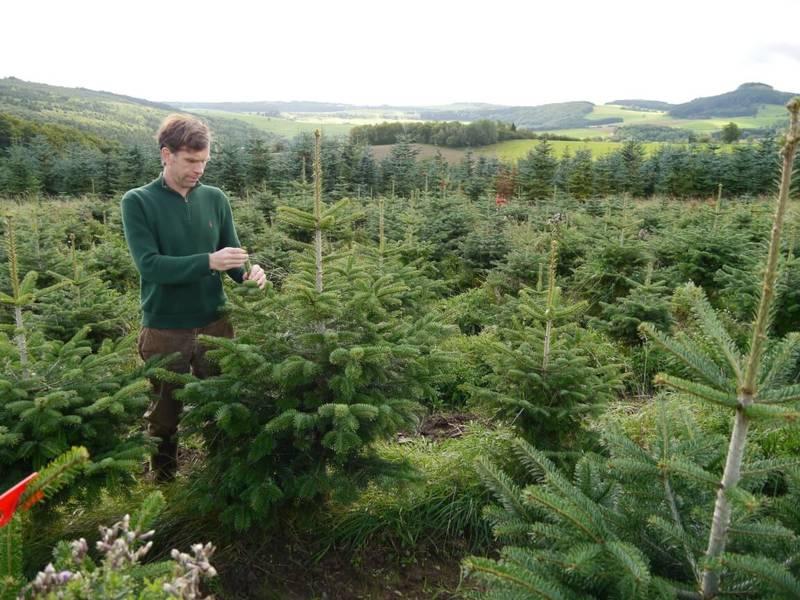 Betrieb weihnachtsbaum ihr weihnachtsbaum lieferservice in bonn for Lieferservice bonn